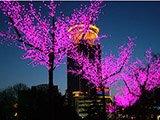 led花树、花篮灯 (5)